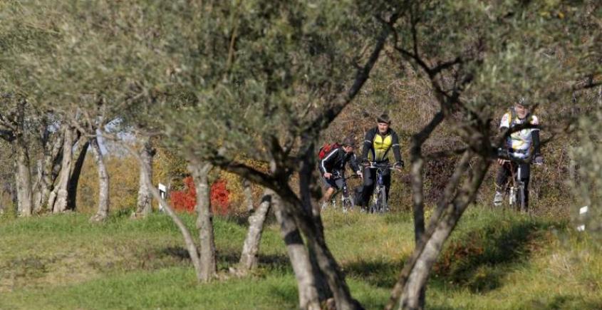 Cycling Race 26.11.2011.