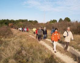 Walking along the Parenzana trail